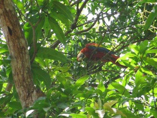 Occidental Papagayo - Adults only: beautiful maccaws