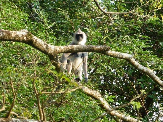 Uga Ulagalla: wildlife