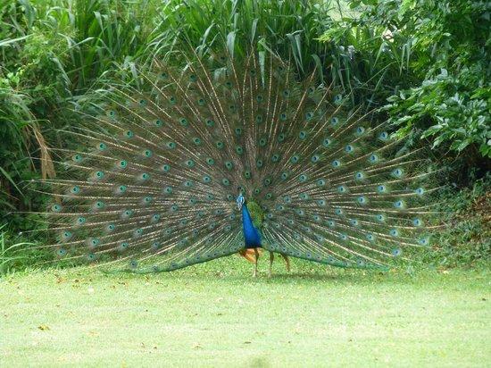 Uga Ulagalla: beautiful display