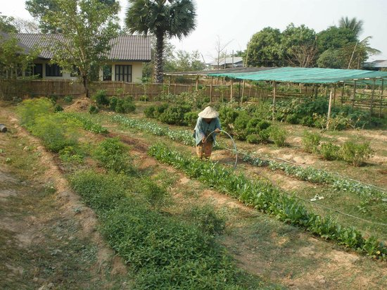 The River Resort : organic vegetable gardens in the hotel