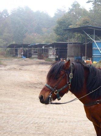 Koyodai Kiso Horse Ranch