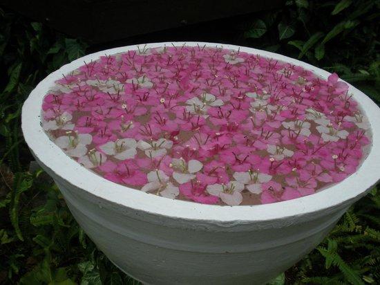 Maison Souvannaphoum Hotel : some lovely flower presentation