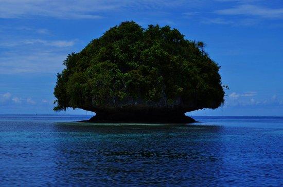 Mushroom Island (Tomba Tuni)