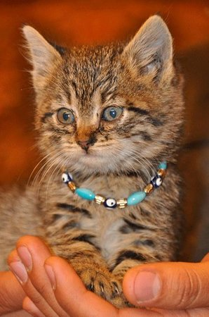 Arasta Bazaar: How can you resist a shop kitten complete with a necklace?