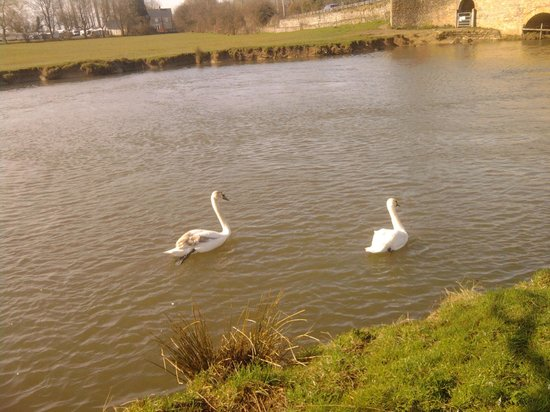 The New Inn: Swans on the river at the bottom of the grounds