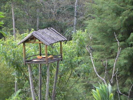 Parador Lumiar: Tomar café e poder observar os passarinhos