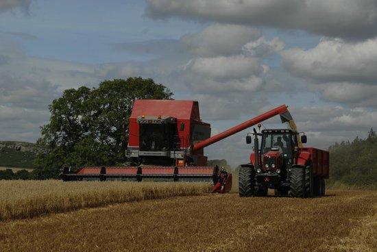 Fenton Hill Farm Cottages: Harvest time