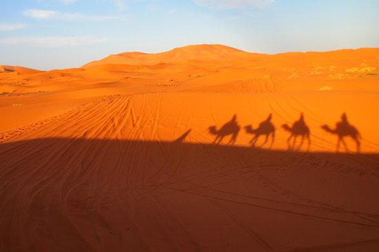 Sahara ATVs: unforgettable camel ride