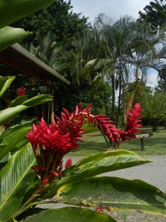 Arenal Country Inn : Fabulous gardens
