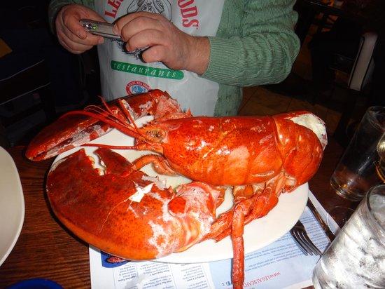 Legal Sea Foods : lobster 5,5lbs.