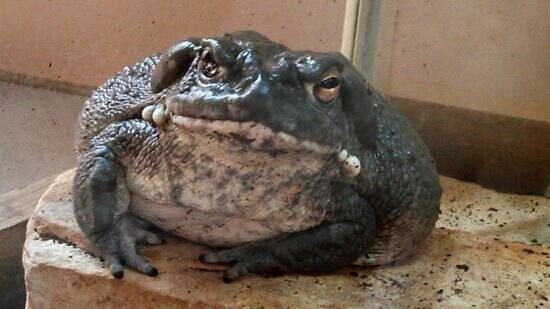 Miller Park Zoo: wow! big boy