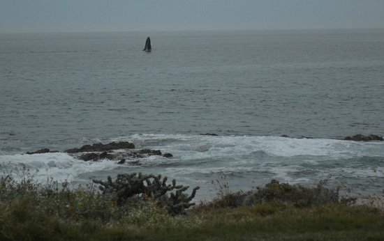 Hacienda del Mar Los Cabos: en temporada podrás ver saltar las ballenas desde la alberca principal