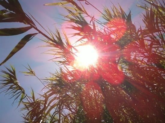 B&B Santa Teresa: summerFeeling
