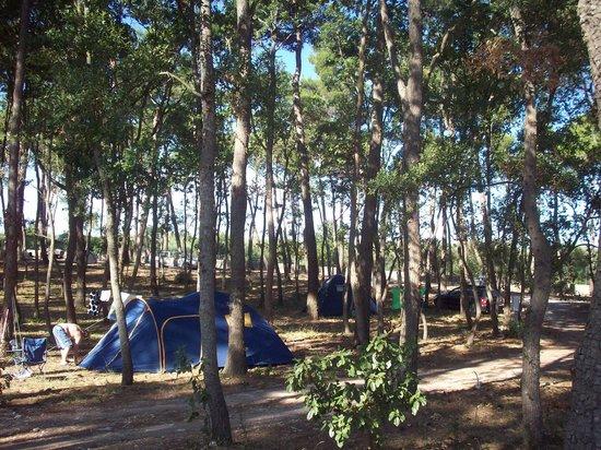 Villaggio Camping Bosco Selva: area campeggio