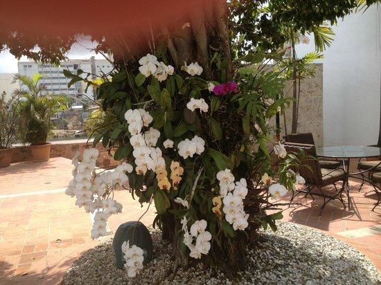 Hodelpa Nicolas de Ovando: les fleurs près de la piscine