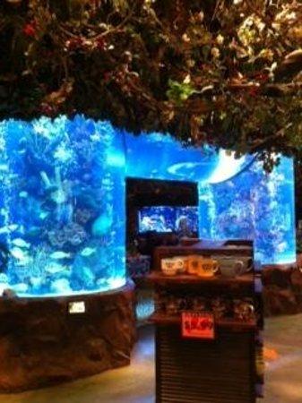 Rainforest Cafe Nashville Tn Hours