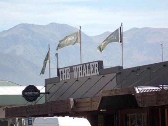 Whale Watch Kaikoura: The Whaler Pub