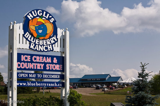 写真Hugli's Blueberry Ranch & Country Gift Store枚