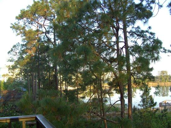 Lake Eve Resort: Early morning
