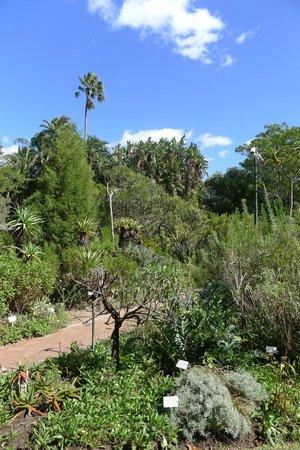 Stellenbosch University Botanical Garden: Garden from Neethling Street entrance
