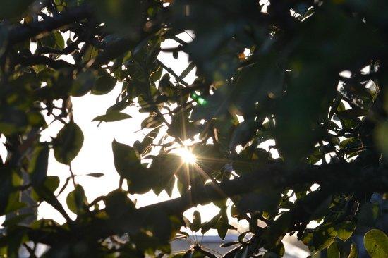 B&B Le Camere Del Bocconcino: raggi tra gli alberi