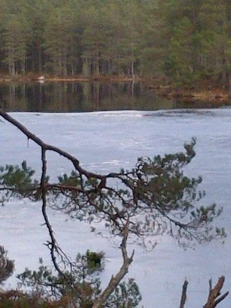 The Old Minister's House: Loch Morlich Feb 2013