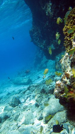 Hotel B Cozumel: Great snorkeling right in front of the hotel