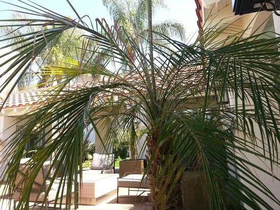Dolce Hayes Mansion: Palms on the patio.