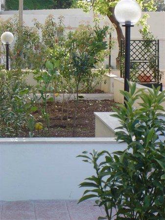 Villa Aurora B&B: il ns verde