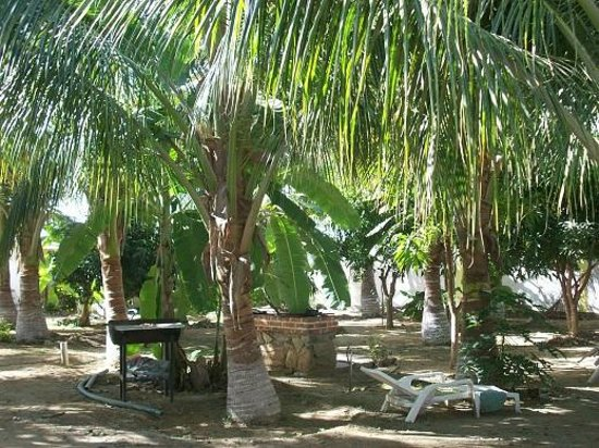 Hotel El Conchalito : Picnic in the huerta. Grills and hammocks for your enjoyment.