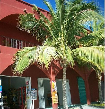 Hotel El Conchalito : Front is somewhat hidden from view by coconut palms.