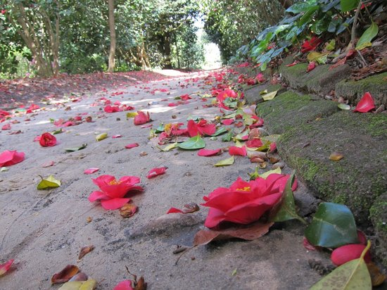 In the camelia gardens
