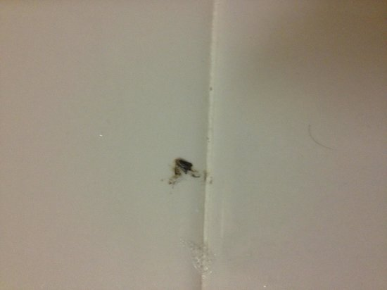 Travelodge Inn and Suites Orlando Airport : Disgusting third world place