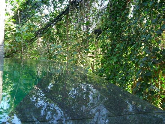 Komaneka at Rasa Sayang: Pool edge
