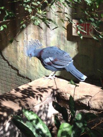 Bird Kingdom: Exotic Bird!!!
