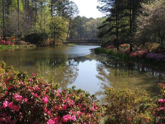 Azalea bloom picture of callaway gardens pine mountain tripadvisor for Callaway gardens treetop adventure