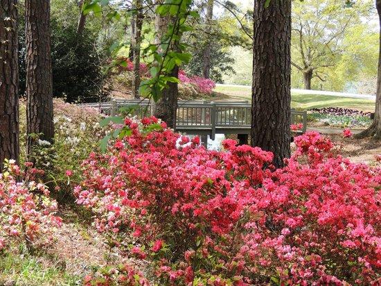 April Blooms Foto De Callaway Gardens Pine Mountain Tripadvisor