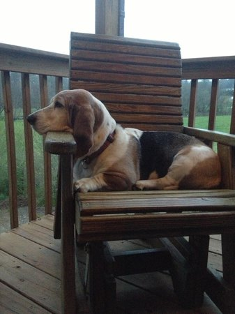 Barkwells, The Dog Lovers' Vacation Retreat: Relaxing on the porch