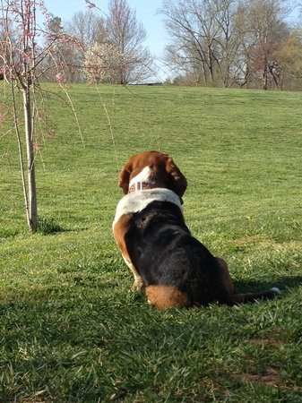 Barkwells, The Dog Lovers' Vacation Retreat: Checking out the fields