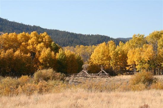 Pioneer Mountain Wilderness Area: Fall color