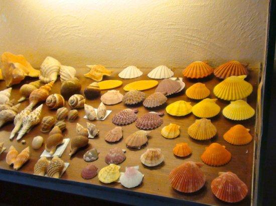 La Hacienda Bahia Paracas: restaurante el coral