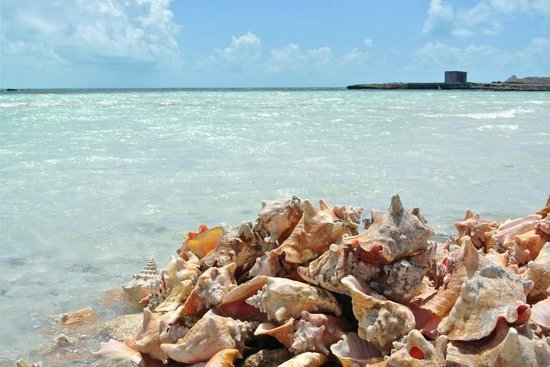 Royal West Indies Resort: Conch pile up at Bugaloos.  Very local, very cool.