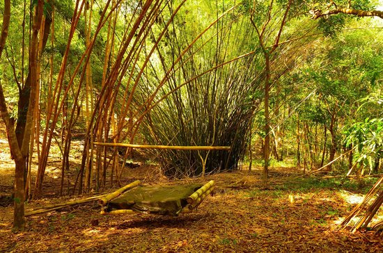 Tropical Treehouse: They have several trails around the property. This is where one lead us.