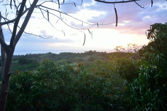 Tropical Treehouse: The view from the Sunset Hooch