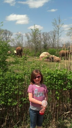 Nashville Zoo: Elephants and Melody