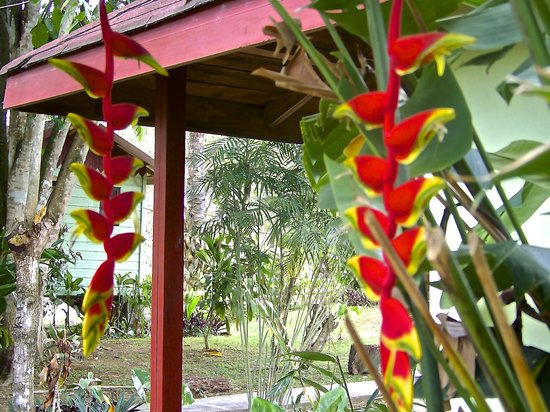Midas Belize: Beautiful plants.