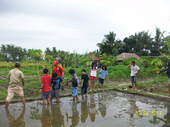 Suly Resort and Spa: Planting Paddy