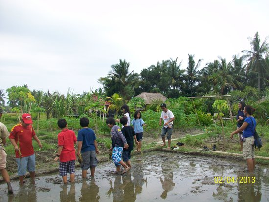 Suly Resort and Spa: Planting Paddy 2