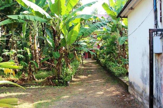 Jose Farms: Giardino Farm