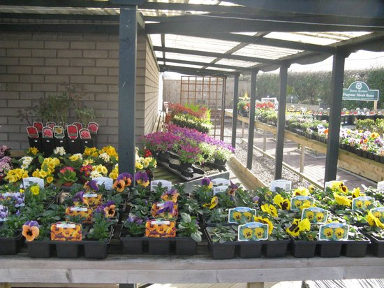 Pendre Garden Centre and Cafe: Bedding plants/shrubs